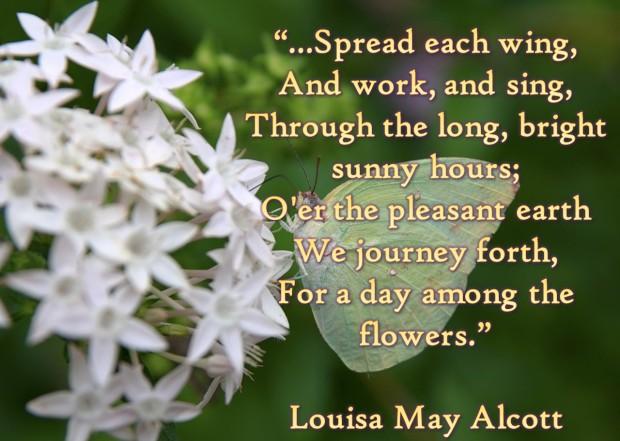 louisa flowers