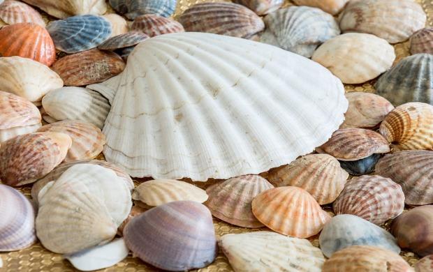 sea-shells-2215408_960_720