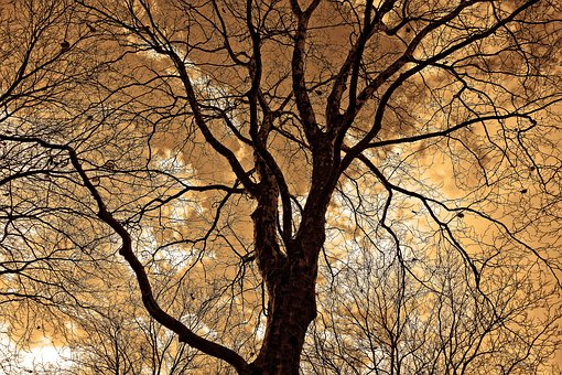 tree-2984906__340